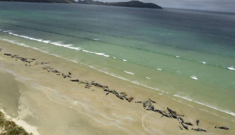 Νέα Ζηλανδία: Νεκρές φάλαινες και δελφίνια στις ακτές Κάθαμ