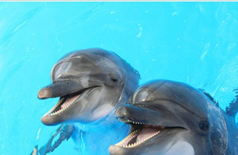 Ηράκλειο: Εγκλωβισμένο σε δίχτυα δελφίνι σώθηκε από νεαρούς