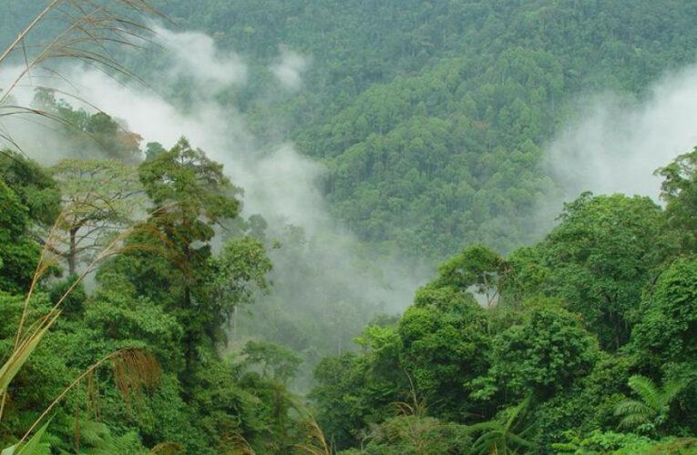 ΣΟΚ: Τα δύο τρίτα των τροπικών δασών έχουν καταστραφεί ή υποβαθμιστεί