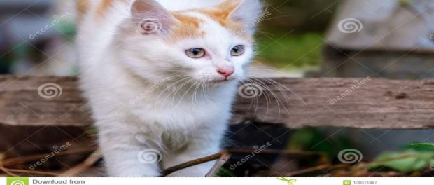 Δολοφονία γάτας στην Δωδεκανήσου – Αποτροπιασμός στα Βριλήσσια