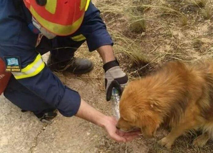 Ο Δήμος Διονύσου συγκεντρώνει είδη πρώτης ανάγκης για τα τραυματισμένα ζώα στις πυρόπληκτες περιοχές