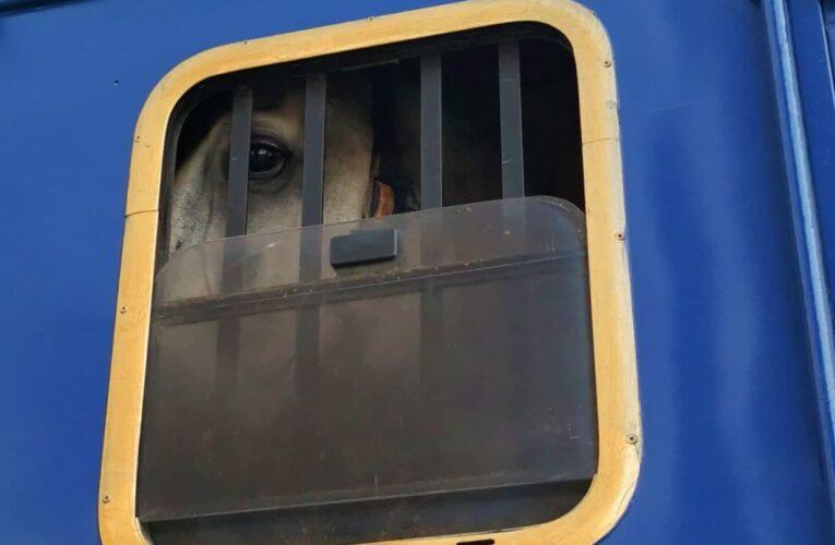 Πυρκαγιά στη Βαρυμπόμπη-Ευρεία κινητοποίηση για τη διάσωση των ζώων