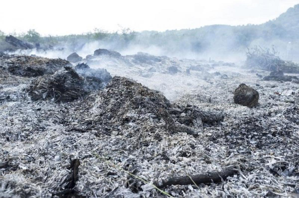 Πυρκαγιές Μαΐου – Αυγούστου: Πώς θα επιχορηγηθούν οι αγροτικές εκμεταλλεύσεις των πληγέντων