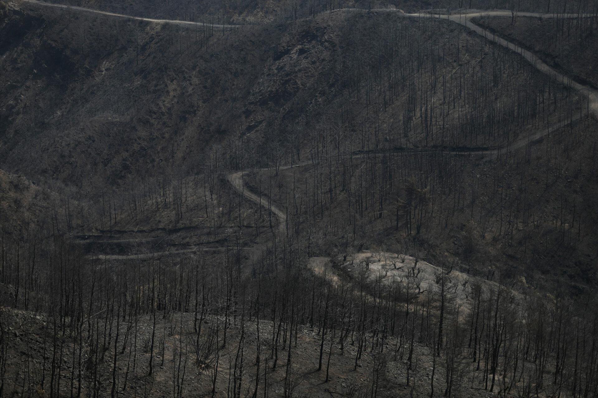 Οι πρώτοι ανάδοχοι αναδάσωσης μετά τις καταστροφικές φωτιές στην Εύβοια