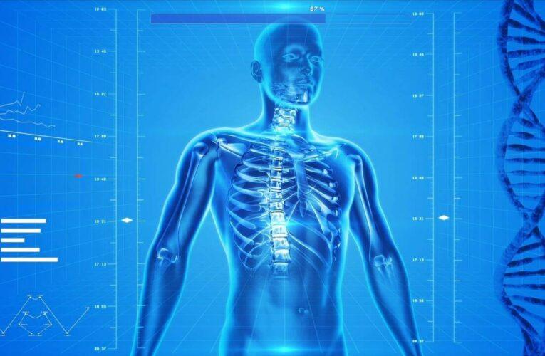 Η γενετική μετάλλαξη που οδήγησε στην απώλεια της ουράς στο ανθρώπινο είδος