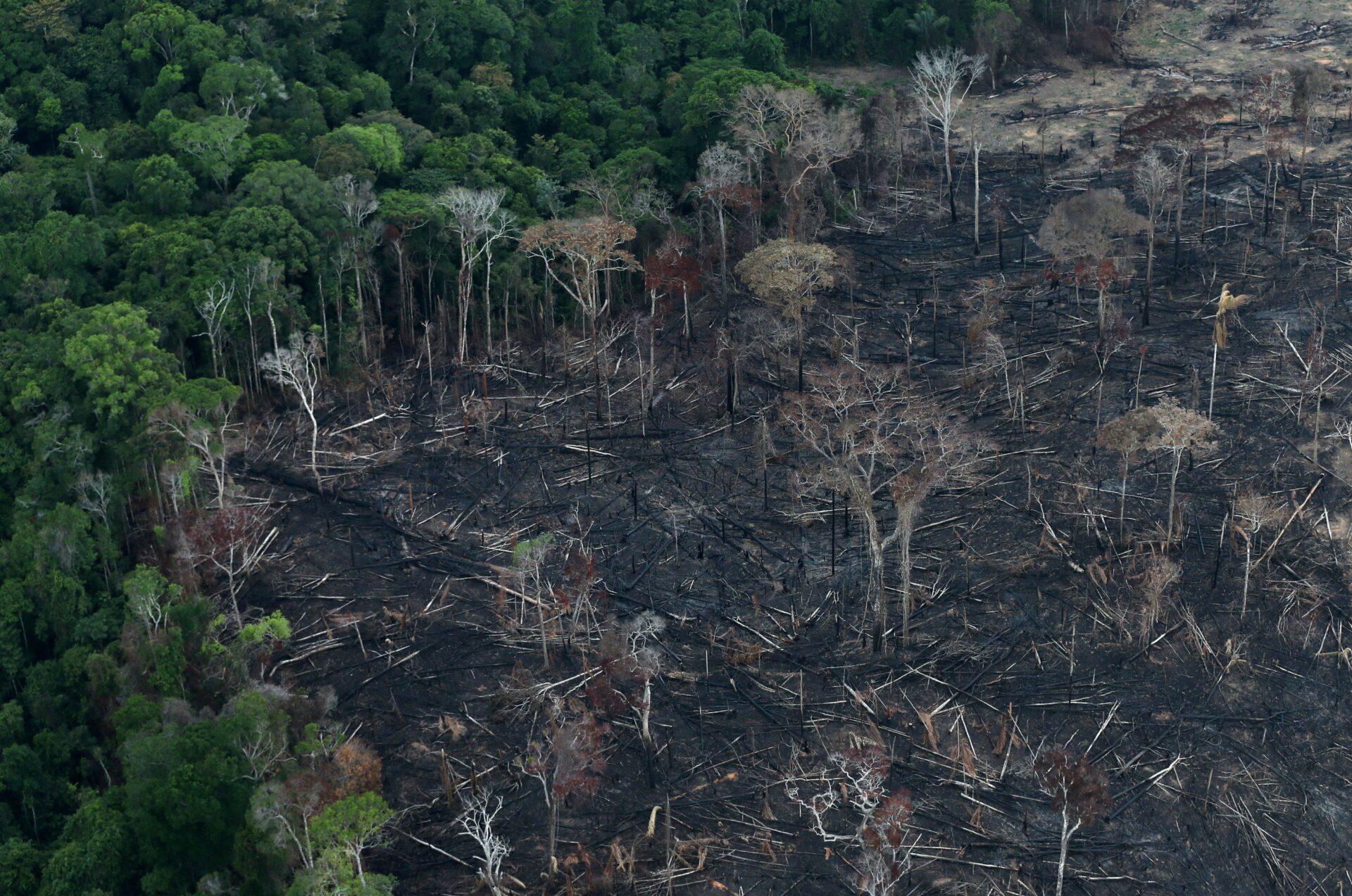 Αποψίλωση του Αμαζονίου: Ακραίοι καύσωνες στη Βραζιλία μέχρι το 2100