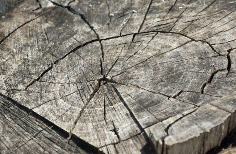 Μπαταρίες φτιαγμένες από… ξύλο δέντρων